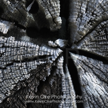 Abstract close up photo of weathered cedar, Portland Island, British Columbia, Canada