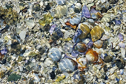 Gulf Island Shells, British Columbia
