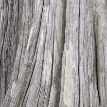 Weathered tree stump, Portland Island, British Columbia, Canada