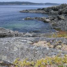 Sedum and grasses on a rocky shore, Portland Island, British Columbia, Canada